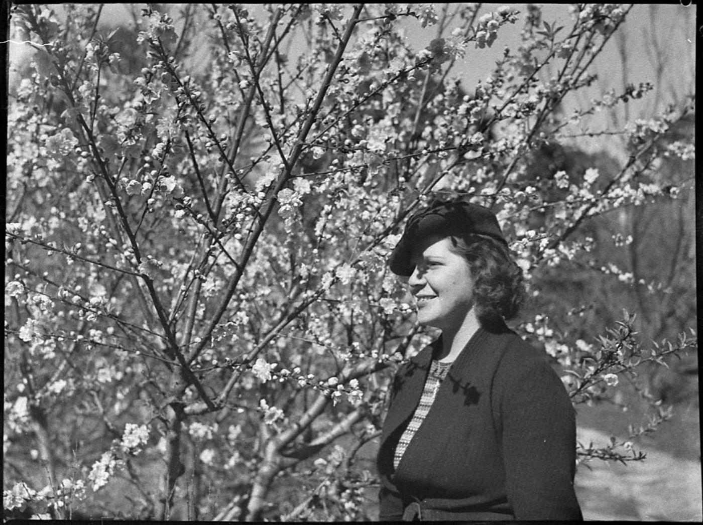 View in Botanic Gardens, October 1938, by Sam Hood