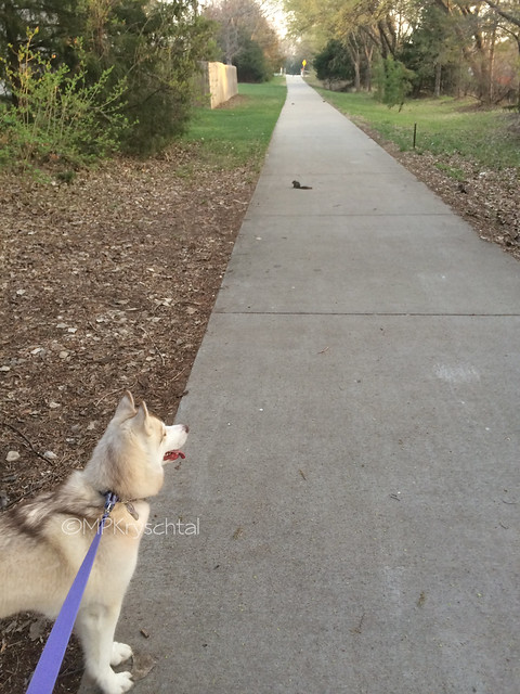 IMG_5784MagBabySquirrel