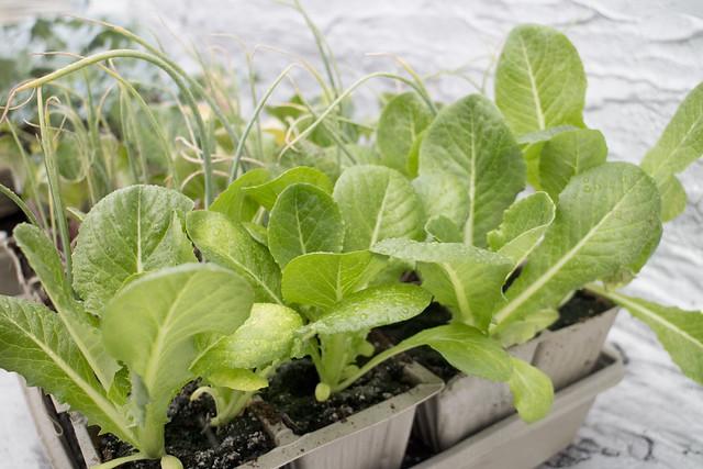Seedling Planting Spring 2014_1