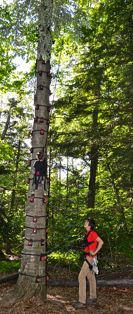 tree climbing obstacle course 1 - Arbor Trek Smugglers Notch, Vermont