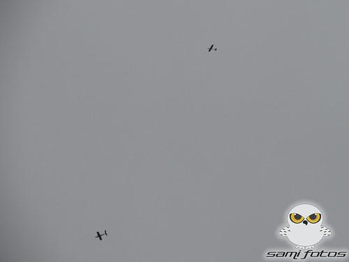 Cobertura do 6º Fly Norte -Braço do Norte -SC - Data 14,15 e 16/06/2013 9072701902_1b806f082e