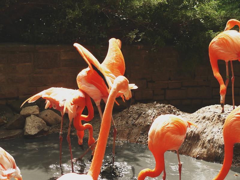 Flamingoflug