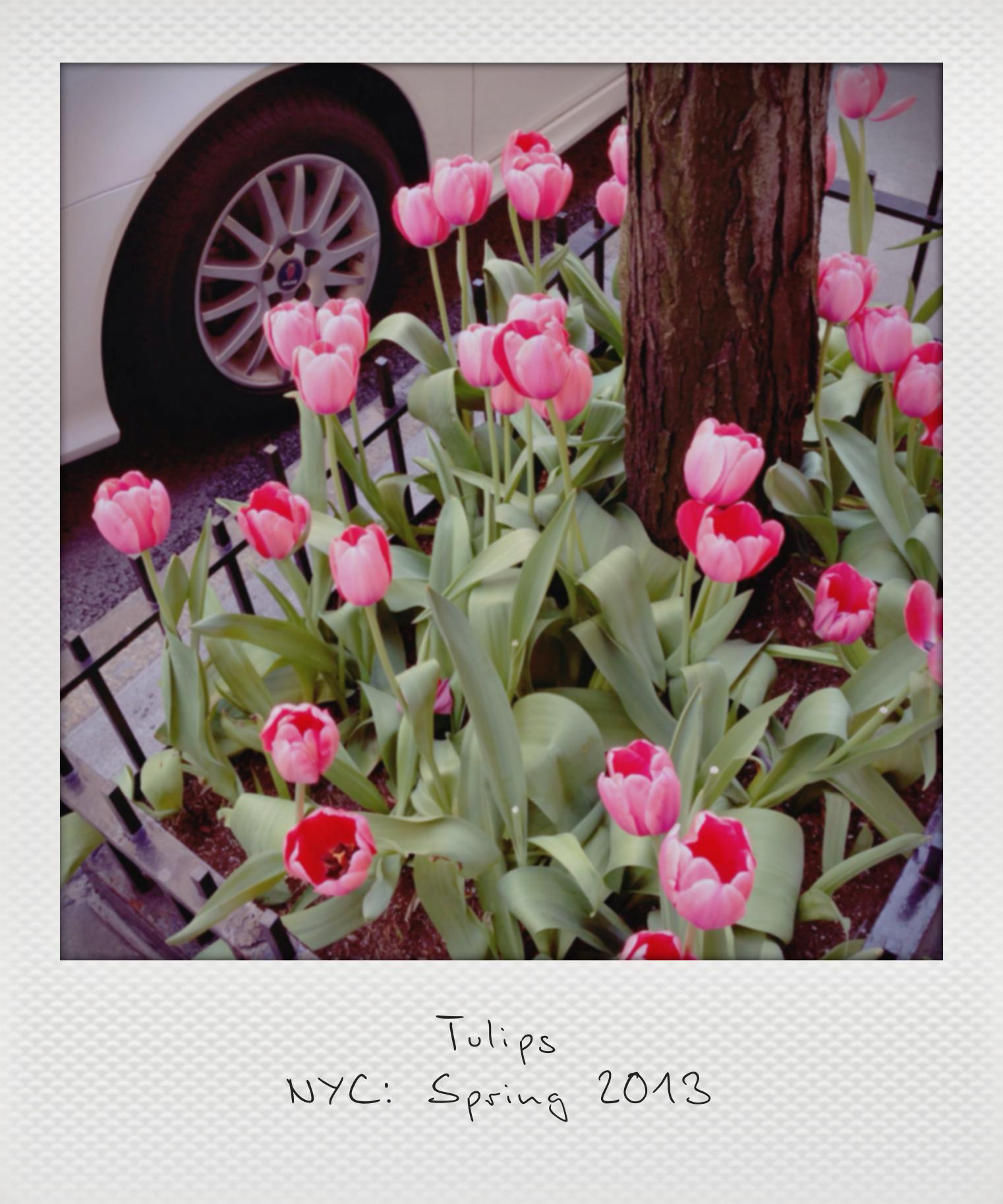 Tulips Polaroid4_instant3