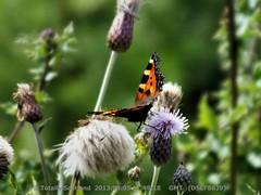 Butterflies 1/3