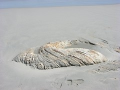 You can get an idea of the size from foot-print in the sand