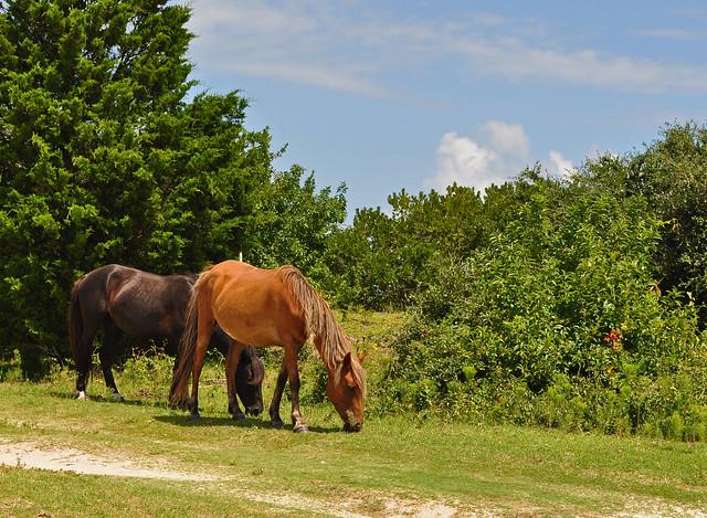 Corova's Horses (2)