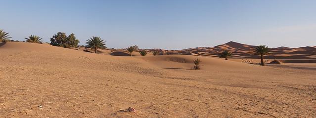 清晨的沙漠-除了遠端的暗紅色沙丘,近處的棕櫚樹也是沙漠的一部分喔~