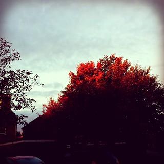 280 - Autumn blaze