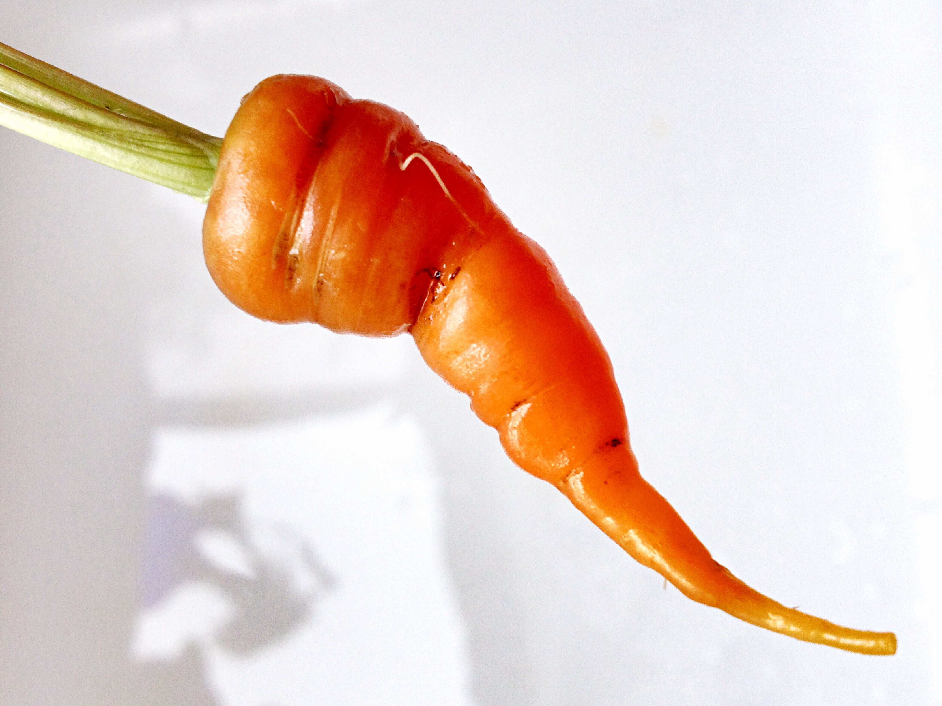 minecraft how to turn carrots into seeds automaticly