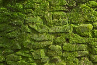 Ciudad Perdida की छवि. texture stone wall geotagged moss colombia ciudad jungle tayrona santamarta perdida teyuna
