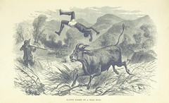"""British Library digitised image from page 273 of """"Explorations and adventures in Equatorial Africa; with accounts of the manners and customs of the people and of the chace of the gorilla, crocodile, leopard, elephant, hippopotamus and other animals. (Seco"""