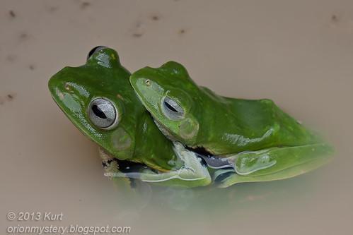 Norhayati's Flying Frog IMG_3480 copy