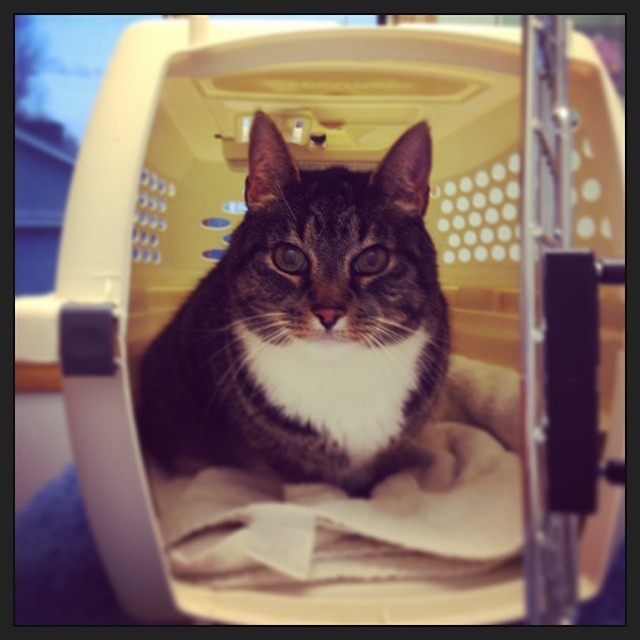 Murderface at the vet this morning. He's fine. Santana punched him in the eye last night. She owes me $55 for the vet bill.