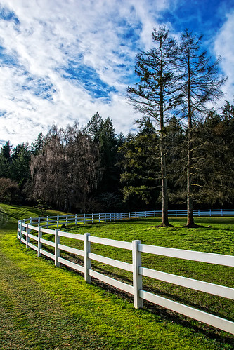 trees field grass fence washington unitedstates pasture bainbridgeisland hazelcreek