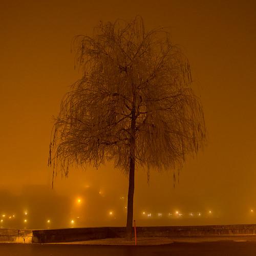 nebel nacht solothurn raureif lichter nachtaufnahme einsam langzeitbelichtung