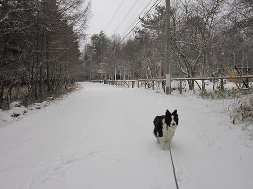 雪降る散歩道 2013年12月13日15:12 by Poran111