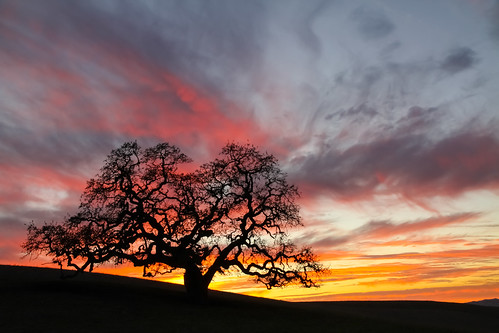 sunset night rural day cloudy oaktree sanbenitocounty pwlandscape canon5dmarkiii