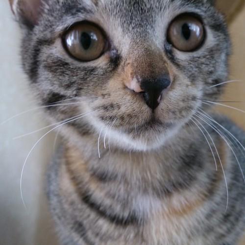 この顔はわりと可愛い by Chinobu