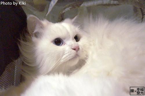 cat_5th (47)
