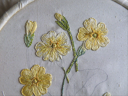 Primrose in Silk 3 - first stems