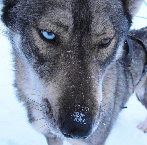 diamond dog - explored