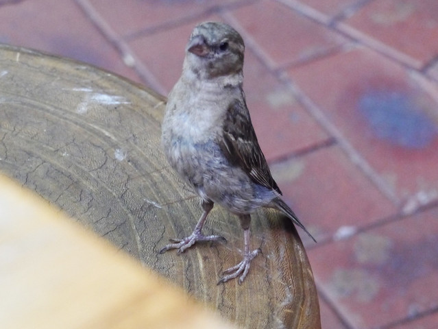 Little proud sparrow visited the table