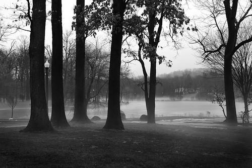 trees winter bw mist blancoynegro silhouette misty fog blackwhite nikon foggy verona ethereal barren atmospheric d600 veronapark