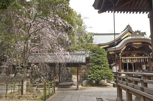 【写真】2014 桜 : 上御霊神社/2019-08-08/IMGP5679