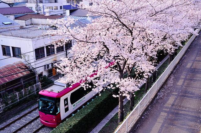 Sakura Arakawa - 8800
