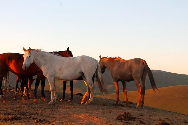 sunset horses 2
