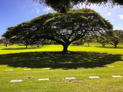 Punchbowl Trees