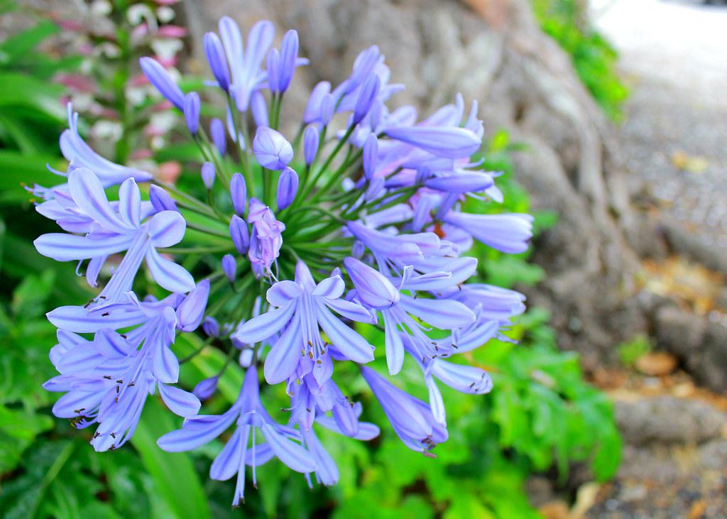 russell-island-flowers