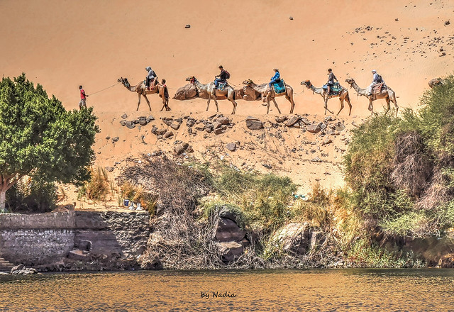 Trail of Camels