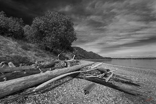 landscape monochrome blackandwhite naturescenes naturetherapy beach shore madrona driftwood pebbles stones rocks mauryislandmarinepark vashonisland