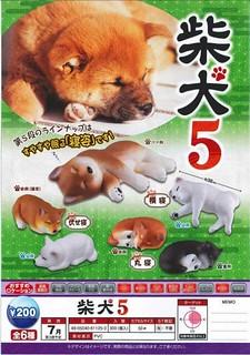 EPOCH  可愛柴犬 第五彈 「萌萌睡姿篇」好評續推!柴犬5