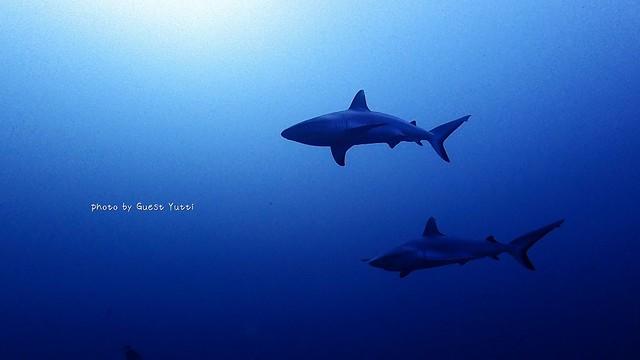 カッコイイ、サメ達にドキドキ♪