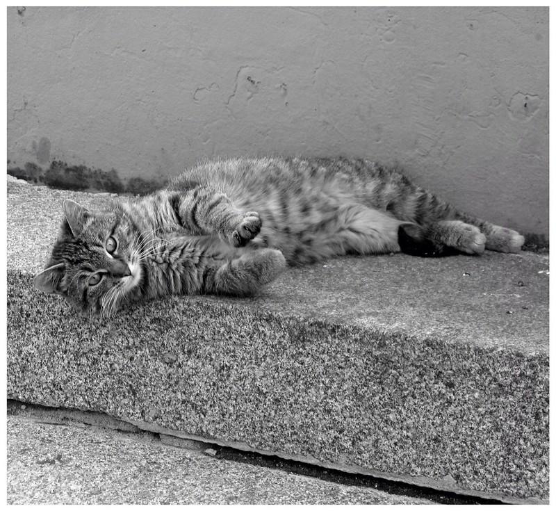 Кот из Часовни. (Фигура первая)