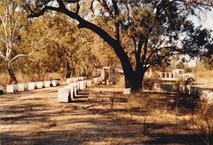 Hives in the Red Gum at Qualco c1985