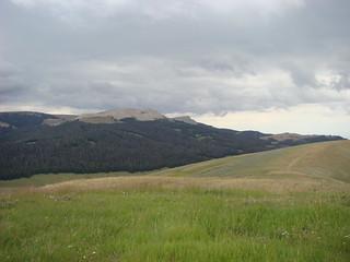 03 Bighorn forest