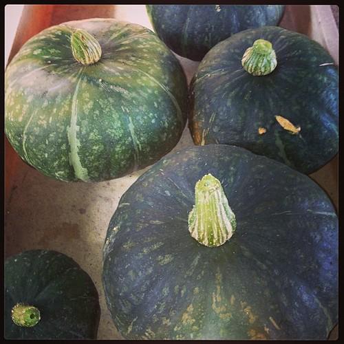 今日の収穫。今日食べないけど。畑には、まだ太かとのゴロゴロしとる