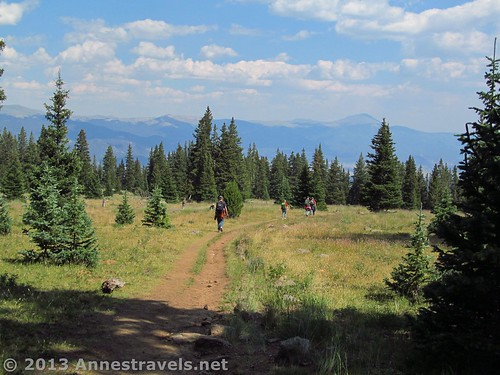Near the treeline on the Mount Elbert Trail, San Isabel National Forest, Colorado