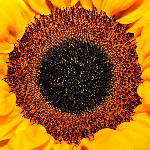 IMAGE: http://farm4.staticflickr.com/3727/9778257784_97566c66ee_z.jpg