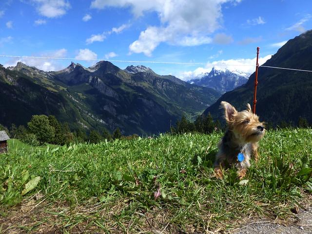 Luna on a mountaintop