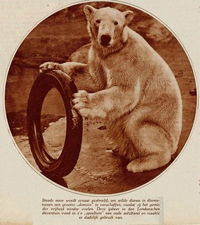 London zoo spelende ijsbeer 1933