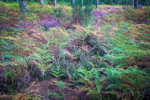 Rainbow of Ferns
