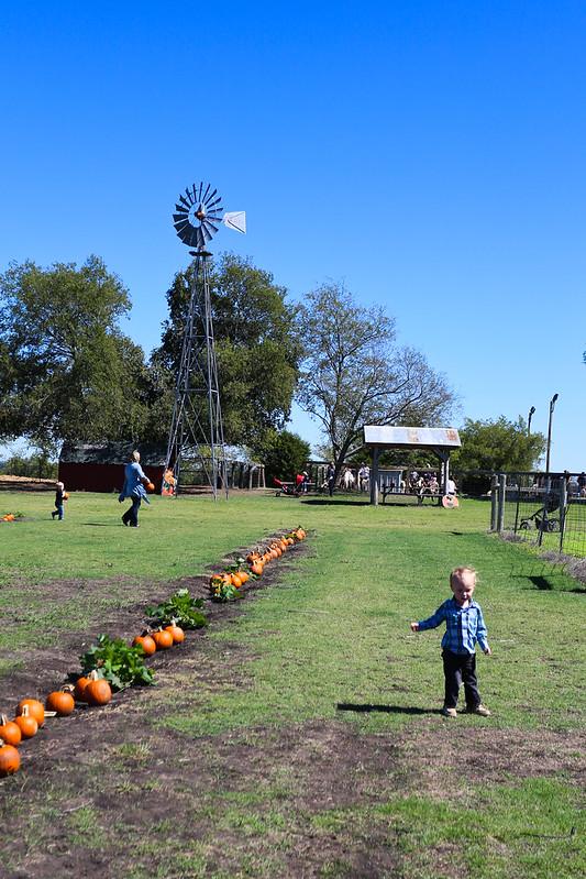 Big Orange Pumpkin Farm-20.jpg