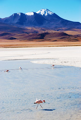 Salt Lagoon, Potosi Department, Bolivia