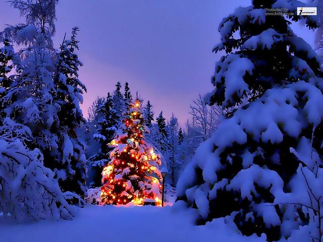 christmas scene wallpaper flickr photo sharing