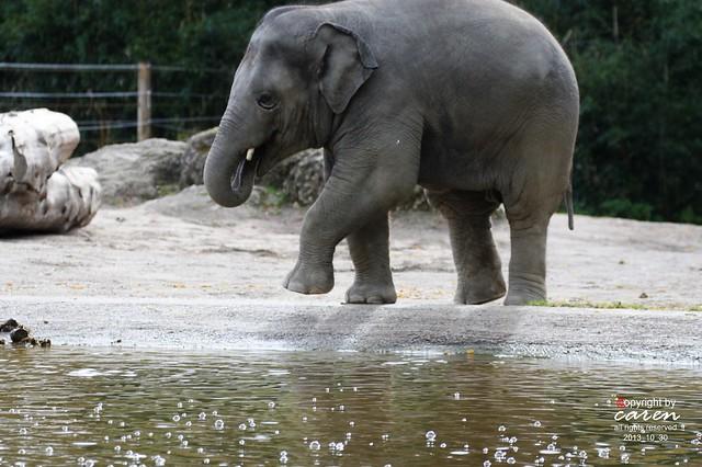 Asiatischer Elefantenjunge Ludwig 2013_10_30 017