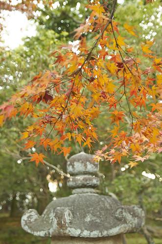 【写真】2013 紅葉 : 白沙村荘/2020-12-28/IMGP3693